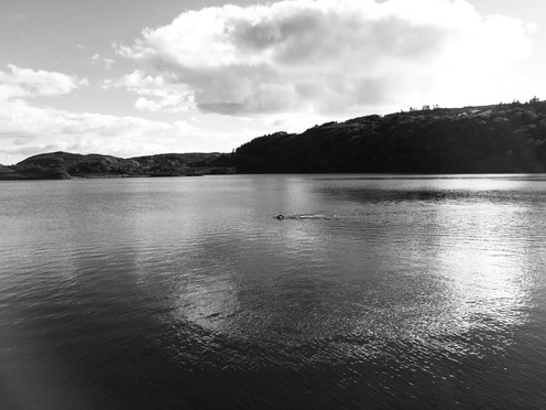 swim lough hyne b&w